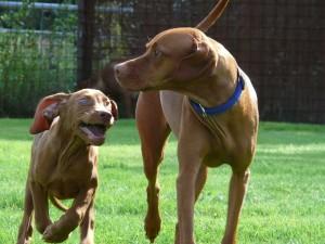 Kiko&Farah 2011